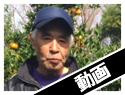 大和村麓さん たんかん取材動画